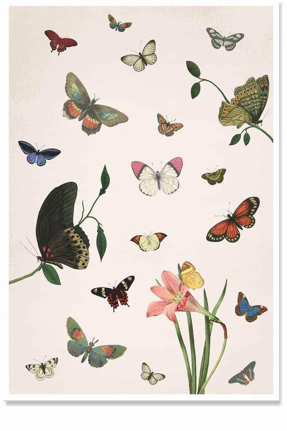 Moth Party Print
