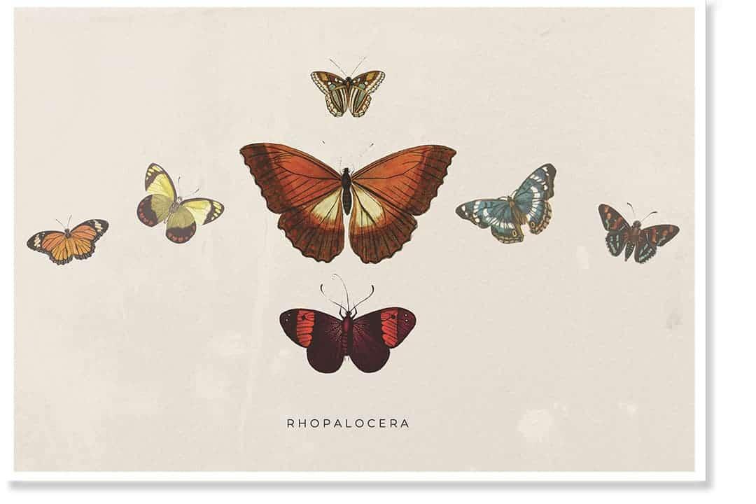 Butterfly artwork poster
