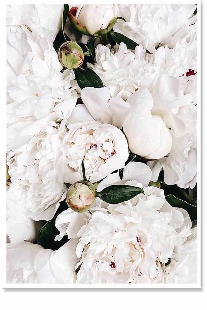 rose akito floral art print