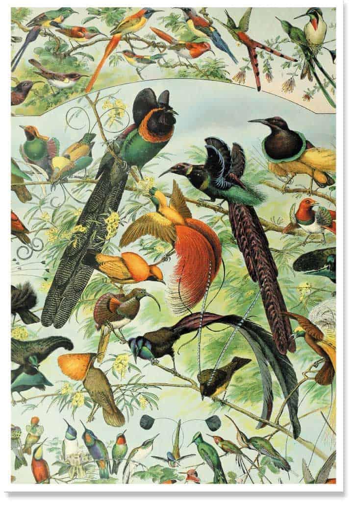 The Bird Party Print