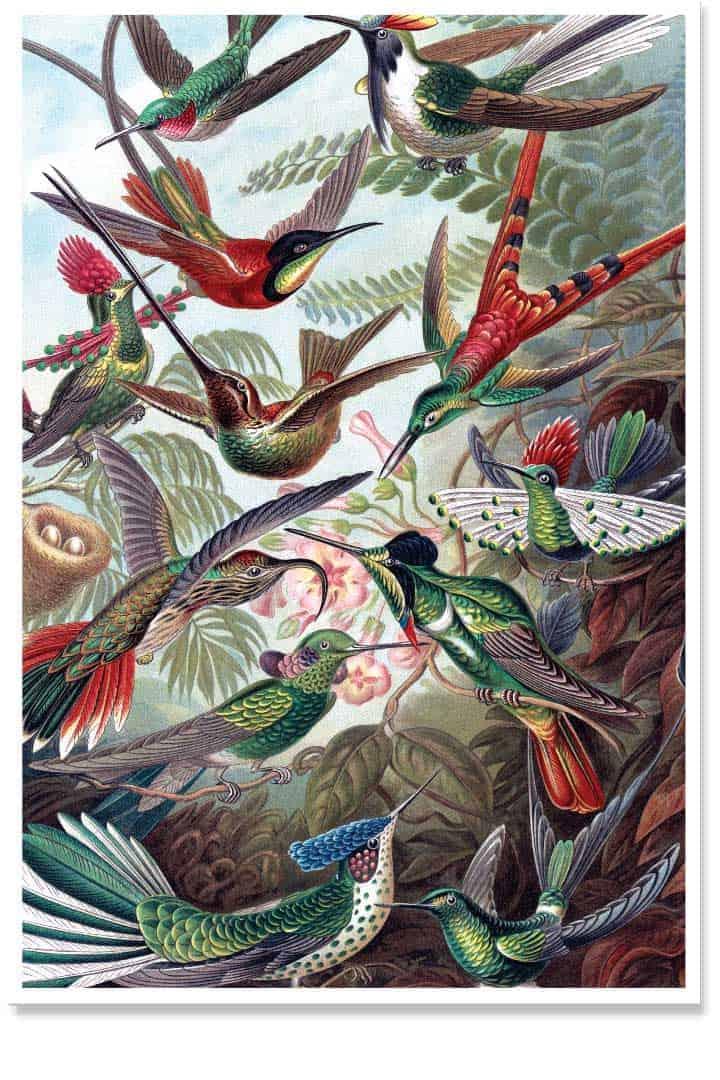 Bird theme poster