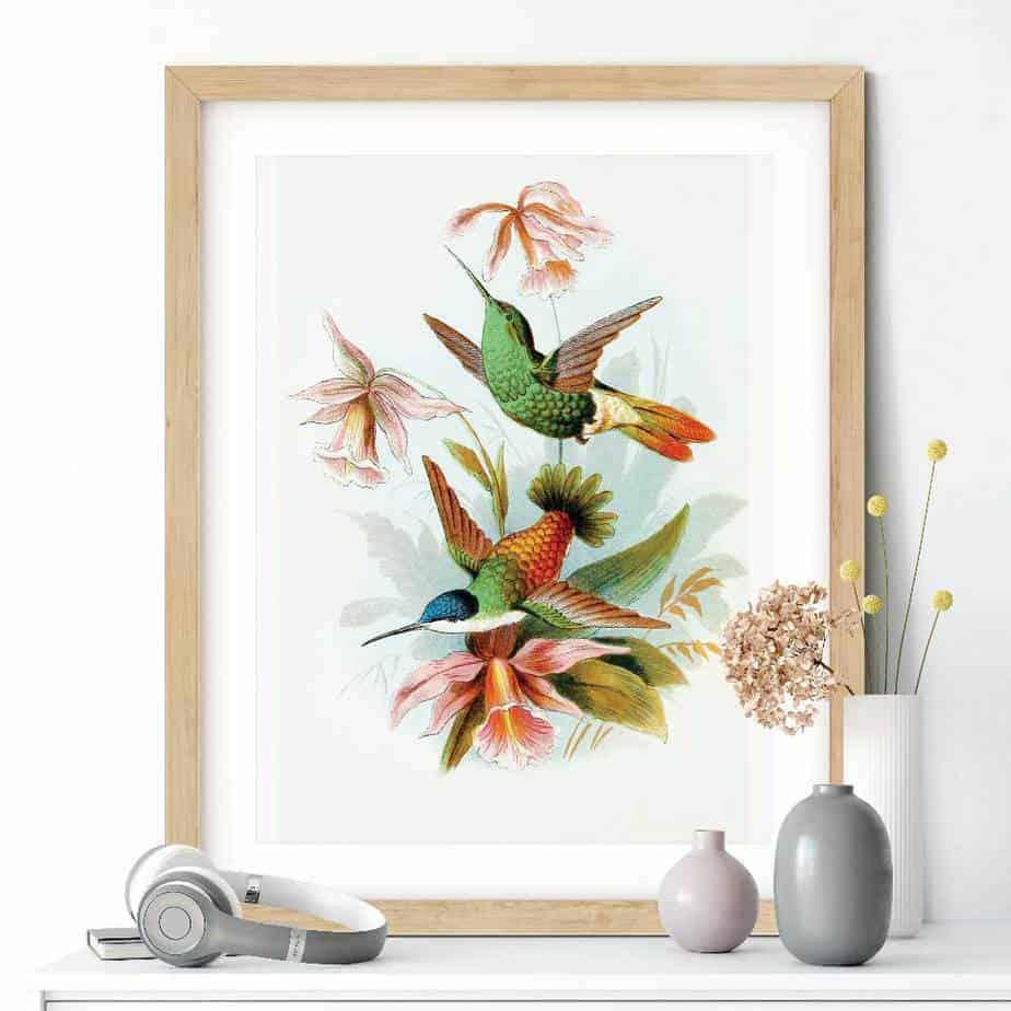 Humming Bird Poster Bird